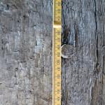 kielbalk met houten pen